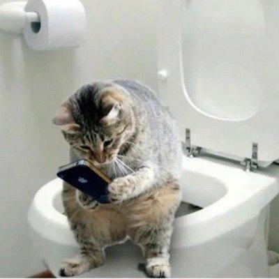 Премиум корма + Наполнители, смываемые в унитаз! — Наполнители для котиков — Туалеты и наполнители
