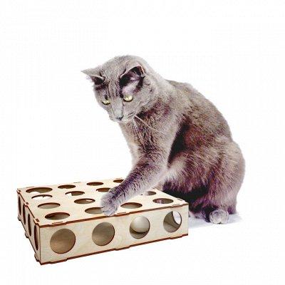 Пермская игрушка  - любая надпись! 🤩 именные изделия — Товары для домашних питомцев — Для грызунов