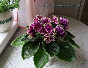 ЕК - Малахитовая орхидея