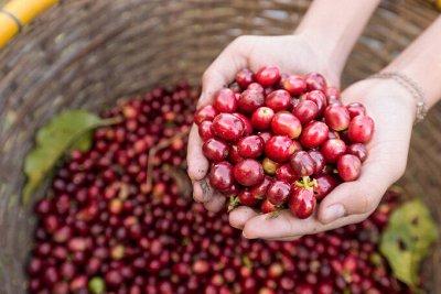 Кофе со всего мира и чай. Все свежайшее! 57 — Микролоты по 100гр — Кофейные напитки
