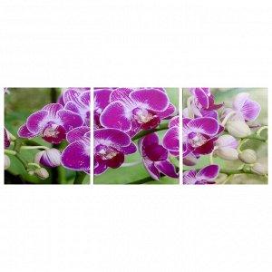 "Модульная картина ""Веточка орхидеи"" (3-35х35) 35х105 см"