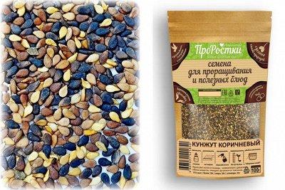 •Сибирские органические продукты • Кедровые подушки! — Семенные для проращивания — Пищевые добавки