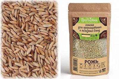 • Сибирские органические продукты • Новые супердобавки•    — Зерновые для проращивания — Пищевые добавки