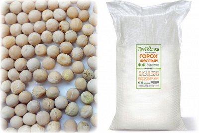 •Сибирские органические продукты • Кедровые подушки! — Бобовые для проращивания — Пищевые добавки