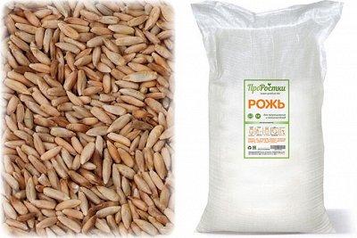 •Сибирские органические продукты • Кедровые подушки! — Зерновые для проращивания — Пищевые добавки