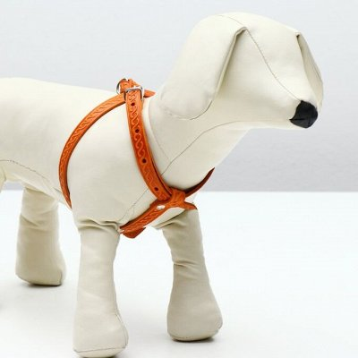 Пижон - для собак - 21 — Шлейки — Аксессуары и одежда
