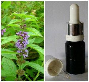 54 Натуральное 100% эфирное масло без добавок Мята полевая (японская) Mentha arvenis L.