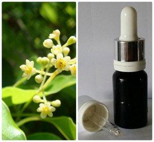 43 Натуральное 100% белое эфирное масло без добавок Камфарное дерево Cinnamomum camphora (L.),Lauraceae.