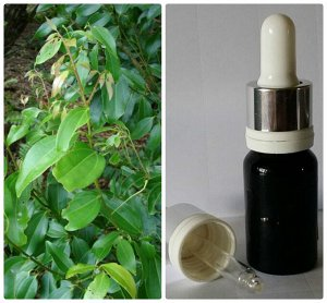 16 Натуральное 100% эфирное масло Корицы (листья и побеги) без добавок Cinnamomum cassia Neex ex Blume