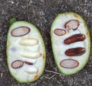 Банан северный Пау-пау