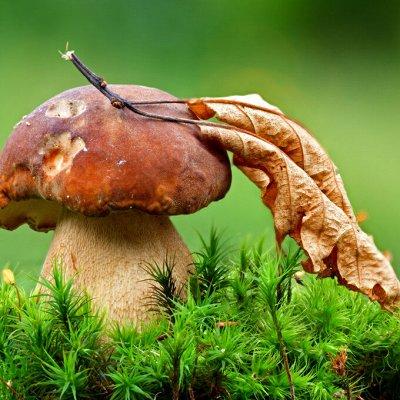 Огромная распродажа семян! +Предзаказ крутого чеснока и лука — Мицелий грибов — Мицелии грибов