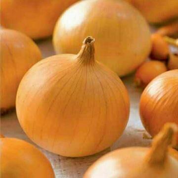 Огромная распродажа семян! +Предзаказ крутого чеснока и лука — Лук-севок и чеснок на посадку — Семена овощей