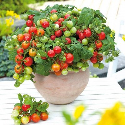 Огромная распродажа семян! +Предзаказ крутого чеснока и лука — Огород на балконе! (семена) — Семена