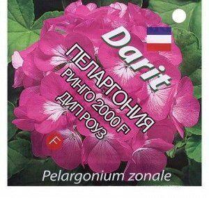 """Семена Семена цветов Пеларгония """"Ринго 2000"""" F1 Дип Роуз, Мн, 4 шт. Пеларгония серии Ringo 2000 F1 имеет все критерии и характеристики, соответствующие первоклассному гибриду. Характеризуется компактн"""