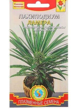 """Семена Семена комнатных цветов Пахиподиум """"Ламера"""", Мн., 3 шт. Это необычное растение - суккулент с Мадагаскара. В комнатных условиях достигает высоты 1м. В процессе роста формирует одревесневающий, п"""