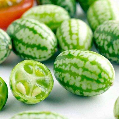 Огромная распродажа семян! +Предзаказ крутого чеснока и лука — Семена экзотических растений — Семена
