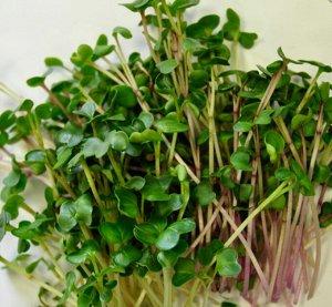 Микрозелень Пикантная смесь