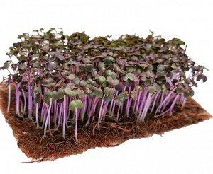 Горчица листовая Фрингед Ред (микрозелень)