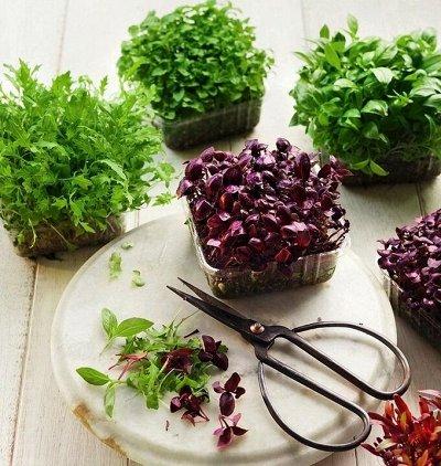Огромная распродажа семян! +Предзаказ крутого чеснока и лука — Микрозелень Срежь и съешь! — Семена зелени и пряных трав