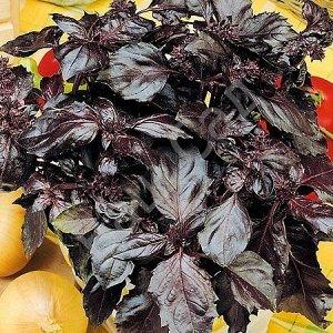 Базилик овощной Рубиновый букет