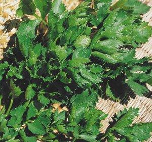 Сельдерей листовой Яблочный