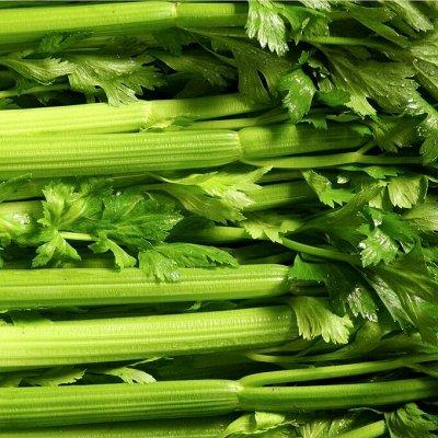 Огромная распродажа семян! +Предзаказ крутого чеснока и лука — Сельдерей (семена) — Семена овощей