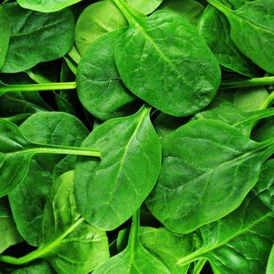 Огромная распродажа семян! +Предзаказ крутого чеснока и лука — Шпинат (семена) — Семена зелени и пряных трав
