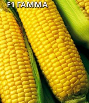 Кукуруза сахарная F1 Гамма