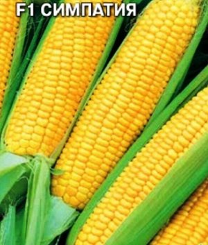 Кукуруза сахарная F1 Симпатия