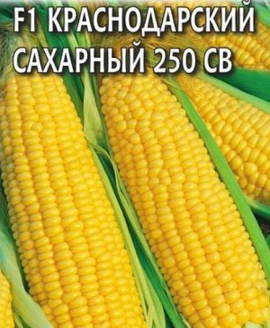 Кукуруза F1 Краснодарский сахарный 250 СВ