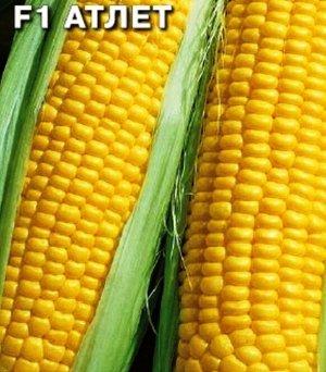 Кукуруза сахарная F1 Атлет