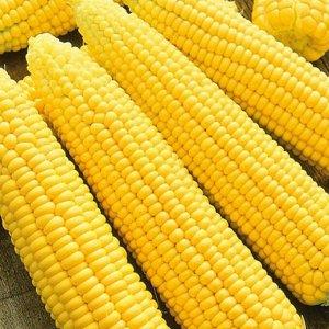 Кукуруза сахарная Яркий Жан F1