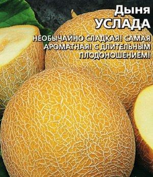 Дыня Услада