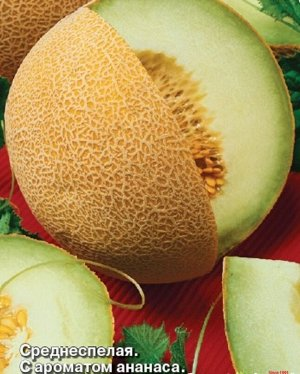 Дыня Осень Среднеспелый (80-95 дней) сорт. Растение плетистое, главная плеть длиной 2,0-2,5 метра. Плод шаровидный, желтый, без рисунка со сплошной сеткой, массой 1,6-2,5 кг. Мякоть светло-зеленая, зе