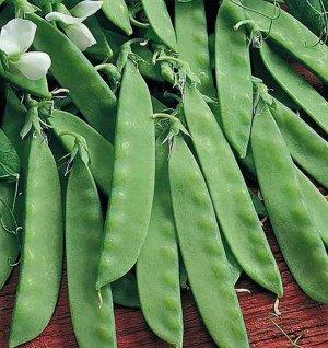 Горох овощной Сахарный принц 25 гр.
