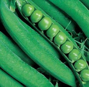 Горох овощной Вада