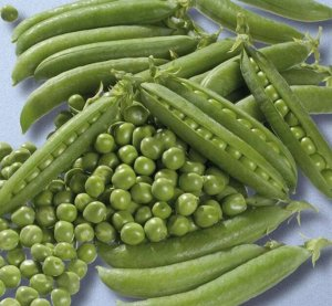 Горох овощной Алтайский Изумруд