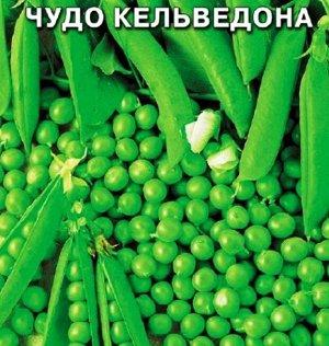 Горох Чудо Кельведона
