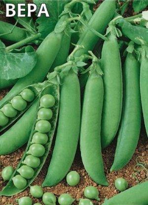 Горох Вера Раннеспелый (48-63 дня от полных всходов до технической спелости горошка) овощной сорт. Стебель простой, высотой 55-65 см. Боб прямой или слабоизогнутый, верхушка заостренная, длиной 6-9 см