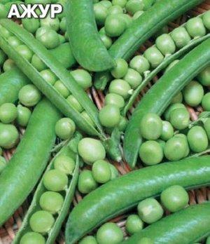 Горох Ажур Раннеспелый (от всходов до получения урожая 60-75 дней) сорт лущильного гороха. Растение невысокое, слабоветвистое, высотой 50-60 см. Бобы слегка изогнутые, длиной 8-10 см с 7-8 крупными, з