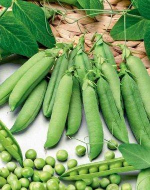 Горох овощной Прима