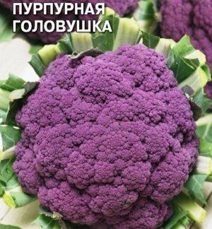 Капуста цветная Пурпурная головушка