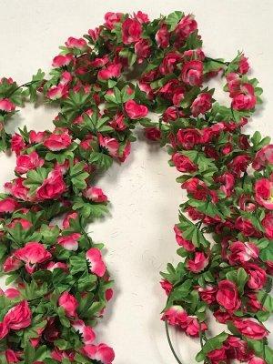 Лиана роза чайная 1,9м бутон 4 см.Цвет розово-белый.