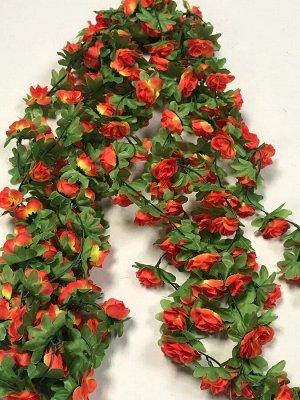 Лиана роза чайная 1,9м бутон 4 см.Цвет оранжевый-желтый.