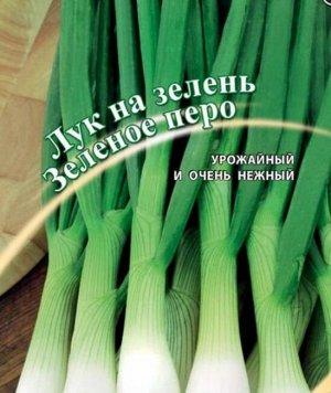 Лук батун Зеленое перо на зелень