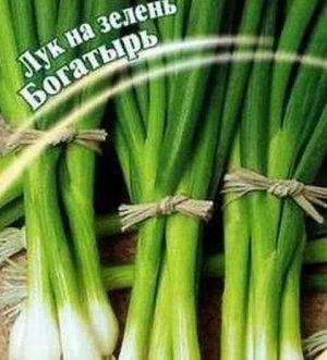 Лук на зелень Богатырь