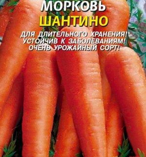 Морковь Шантино