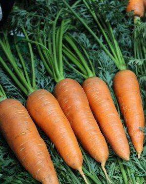 Морковь Китайская красавица