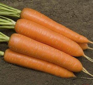 Морковь Сиркана F1