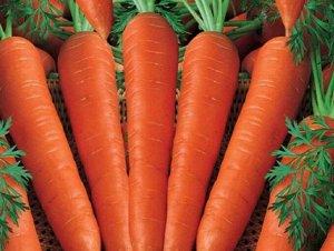 Морковь Корина